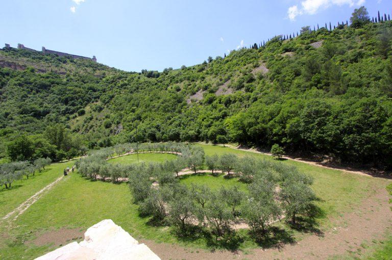 Assisi: bosco