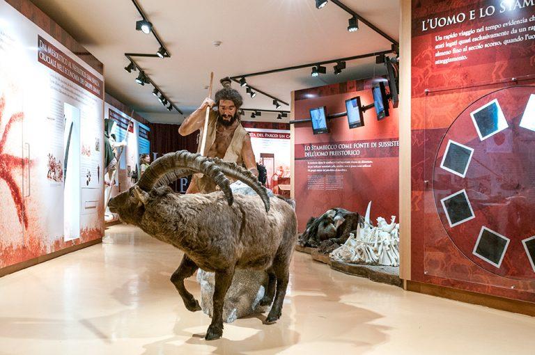 Ceresole Reale: museo stambecco