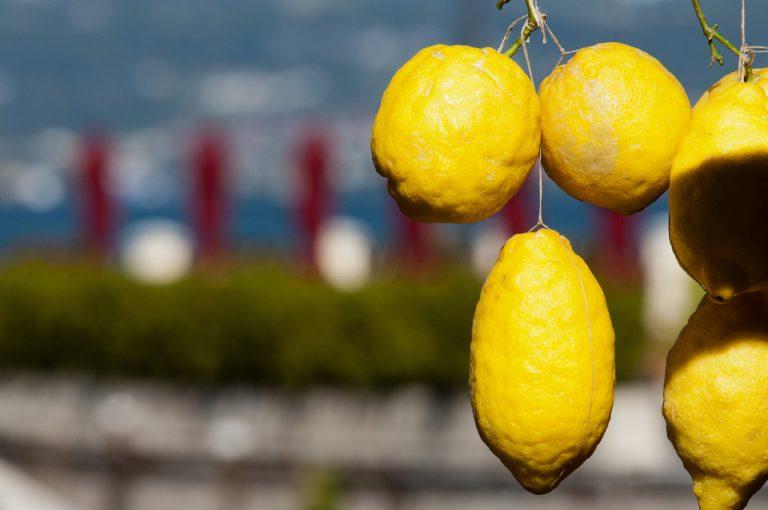 Battello lago di Garda: limoni