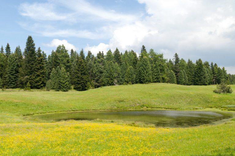 Val Pusteria: pascoli