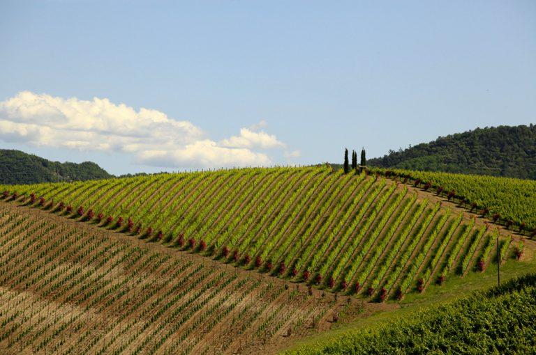 camper colline tortonesi: panorama