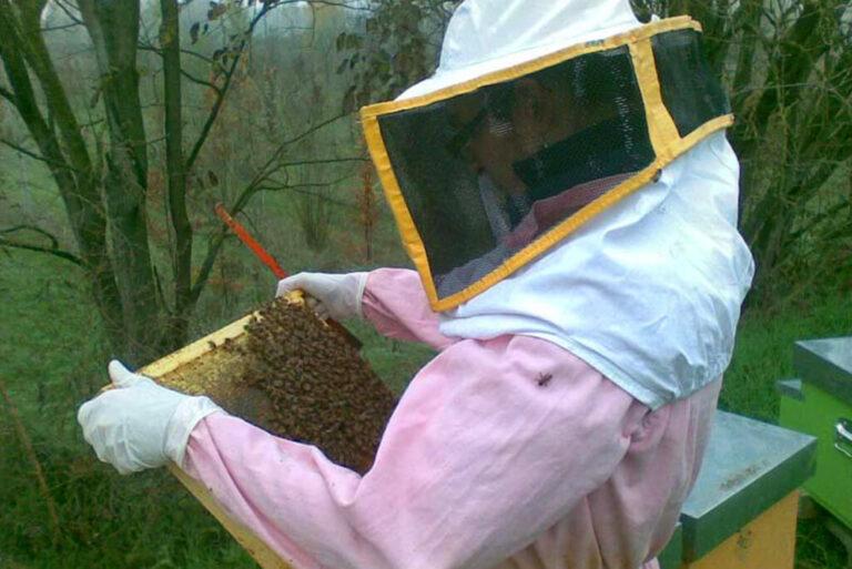 L'oasi naturale le bine: api