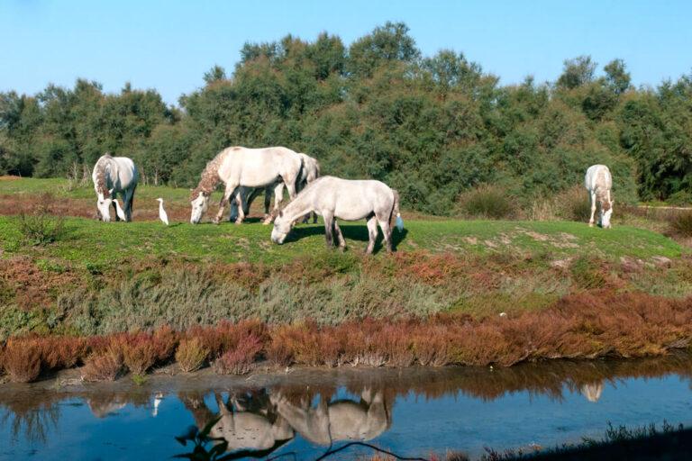 La natura selvaggia di boscoforte: cavalli